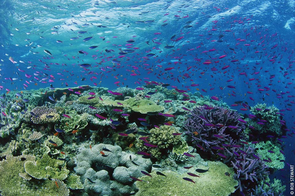 Revolution_Korallen-Great-Barrier-Reef